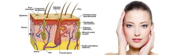 colageno verisol age camadas profundas pele